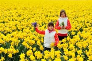 חופשה בהולנד עם ילדים